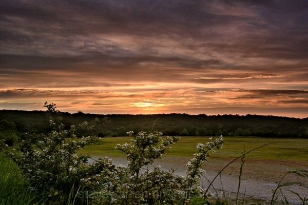 Blackberry bushes and Sunset