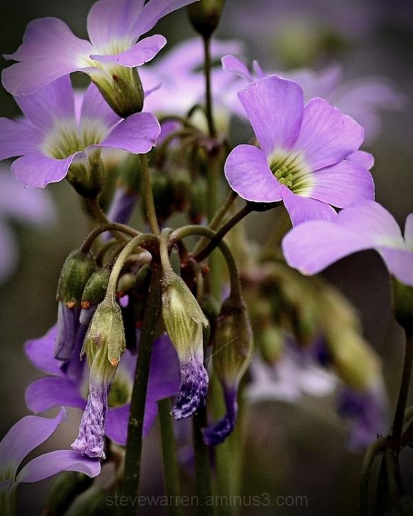 Little yard Flowers 2