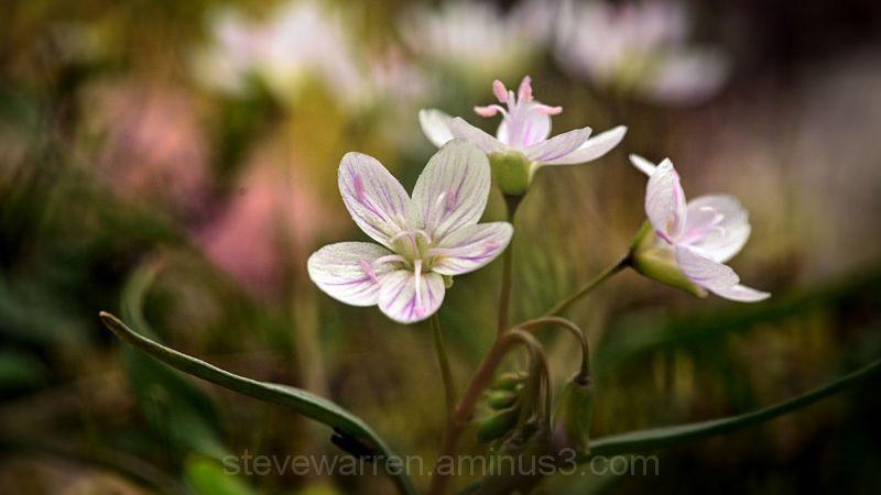 Little yard Flowers 4