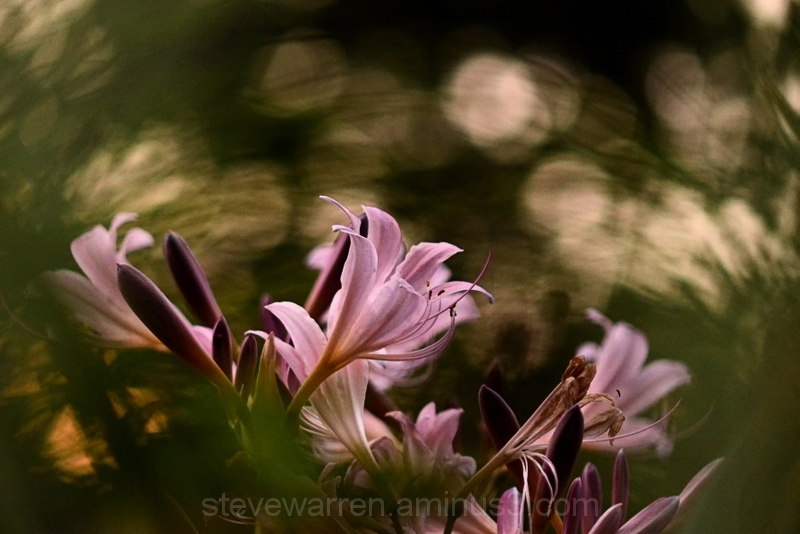 Through the maiden grass