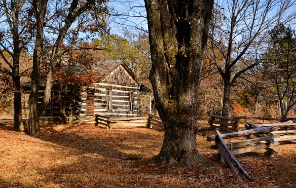 Old Cabin and Tree