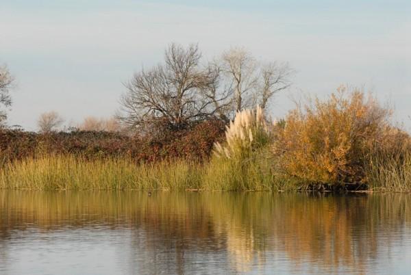 winter in the delta