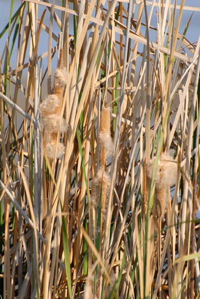 exploding cat tails