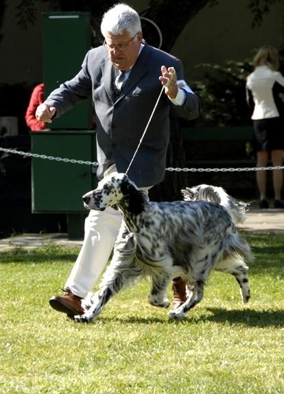 dog running his man