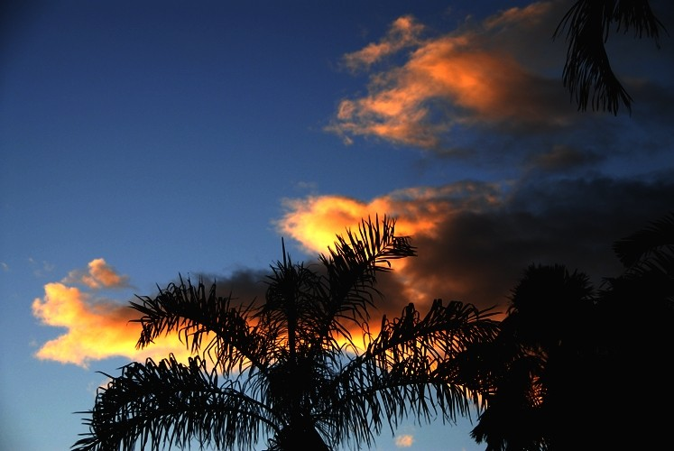boticelli clouds and palm trees
