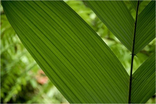 spicky palm leaf