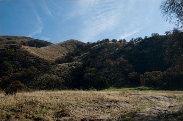 oaks on the hills