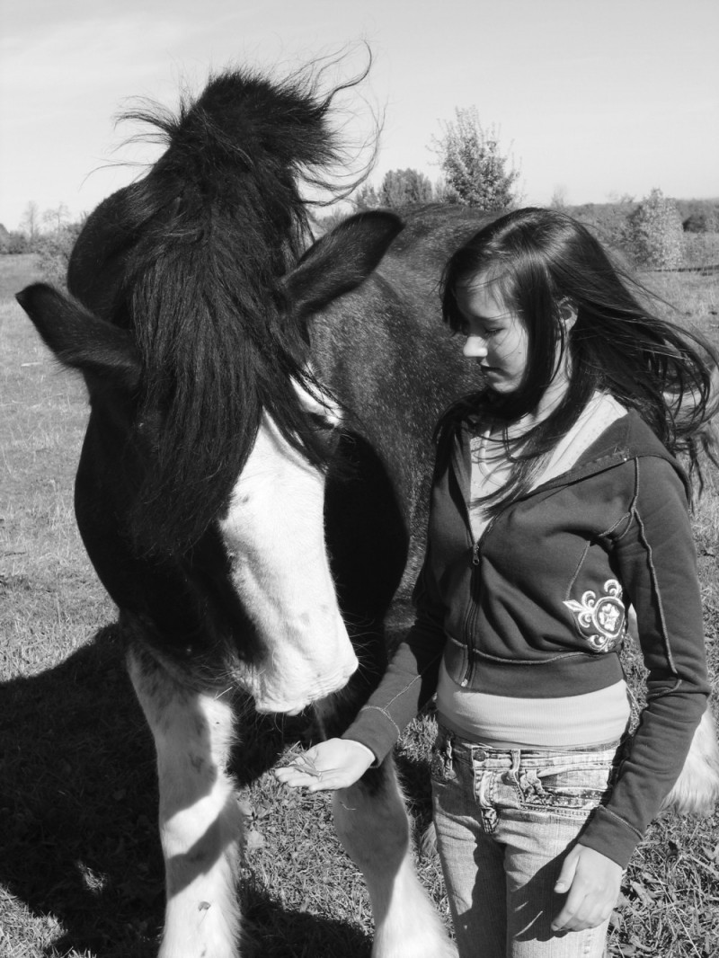 girl with clydesdale horse