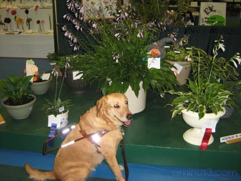 Plants at Western Fair