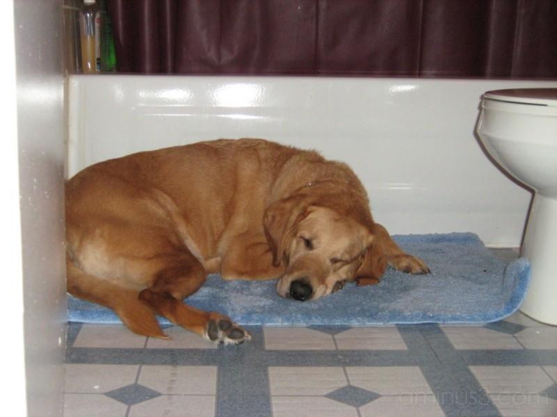 Parade napping on the bath mat