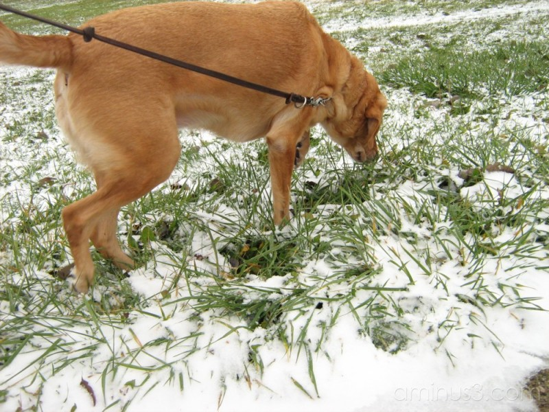 come one i wanna play in the snow