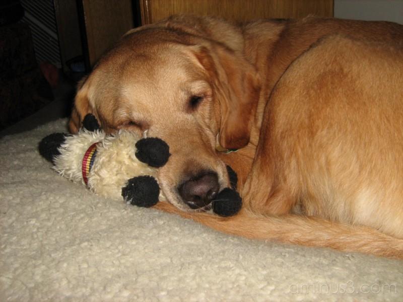 Radey sleeping with her lamb