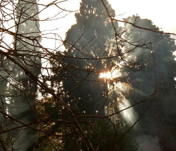 Beautiful sun effect through the trees