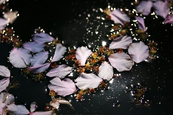 Strewn with Petals
