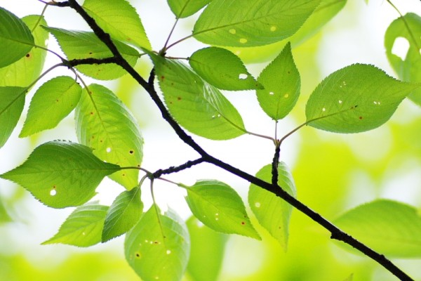 Fresh Green of the Tree