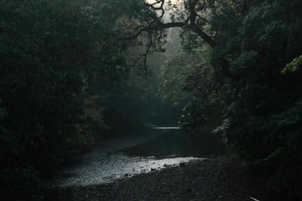 Sense of Serenity
