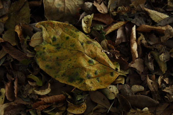 Sense of the Upcoming Autumn