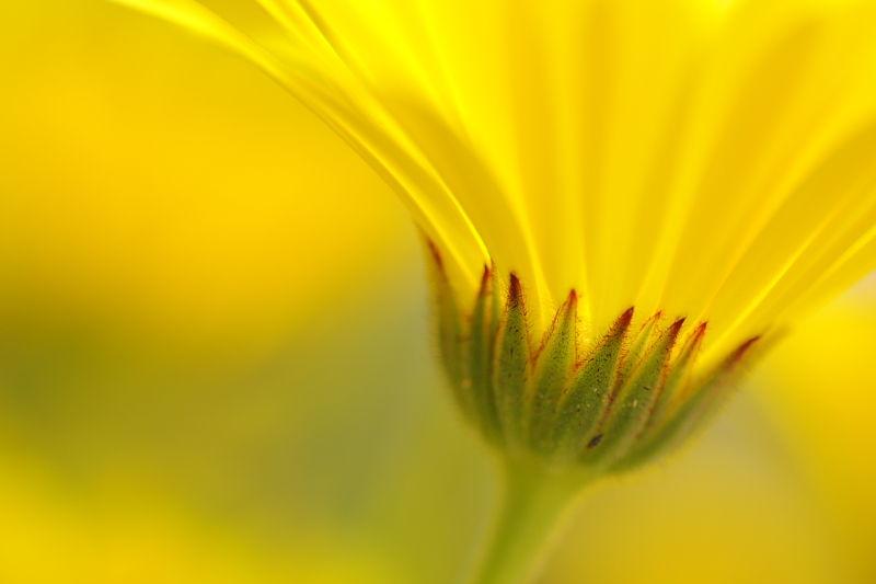 Spring Bloomer