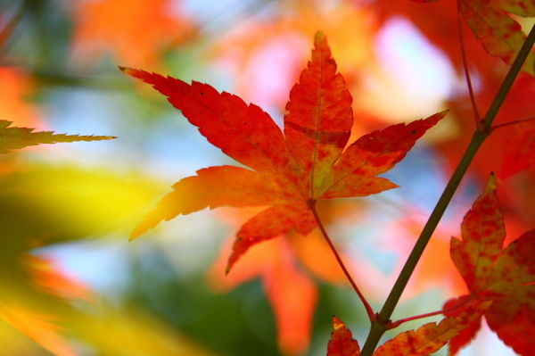 Coming of Autumn