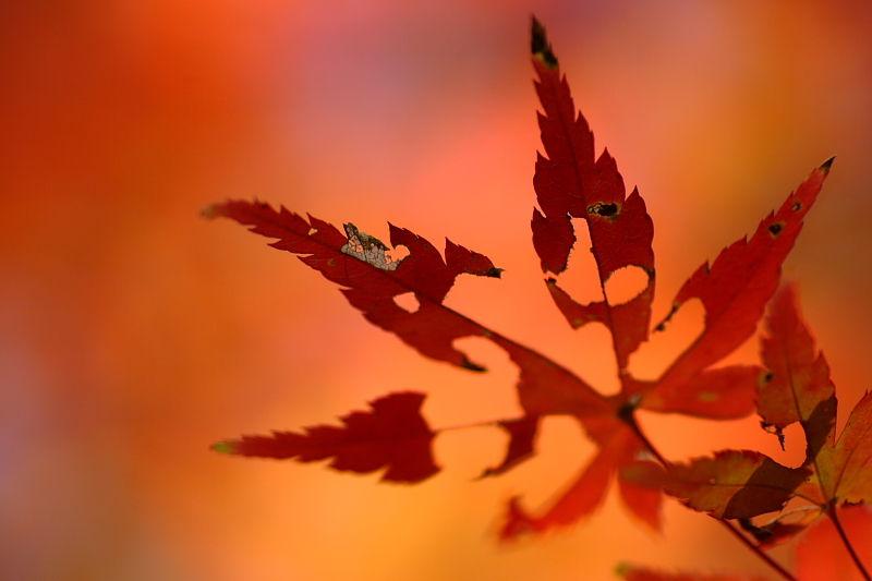 Leaf Dying