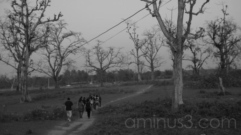 chitwan forest (2)