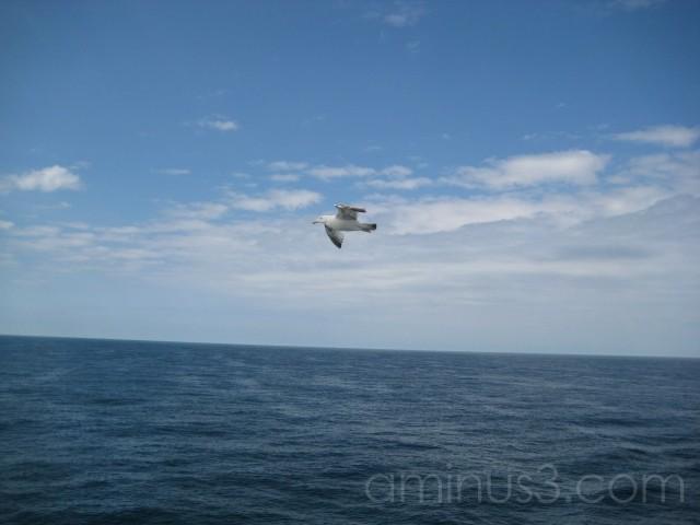 bird, water, me