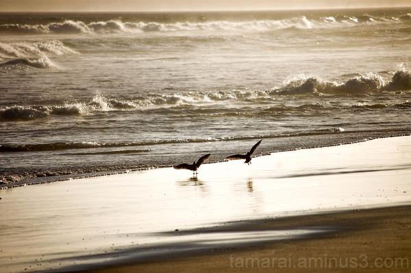 birds at sunset (3)