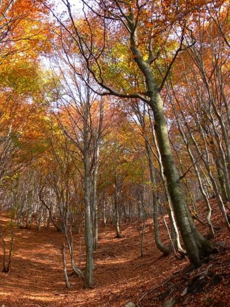 affresco d'autunno