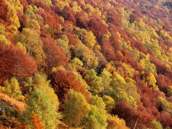 autunno colori piante montagna