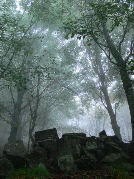 nebbia montagna