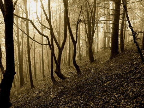 montagna alberi autunno