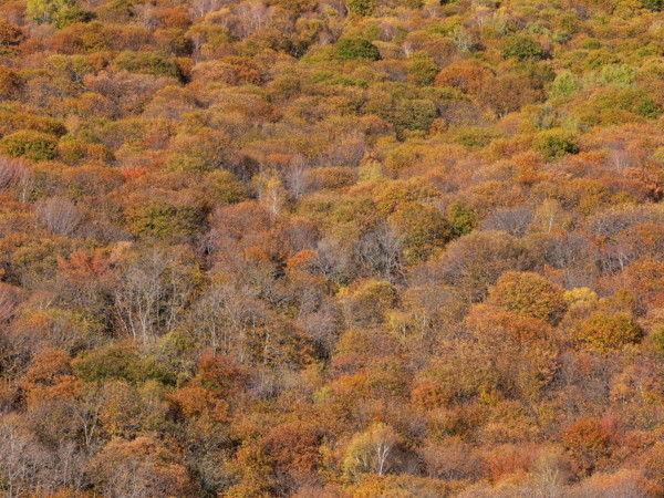 autunno colori
