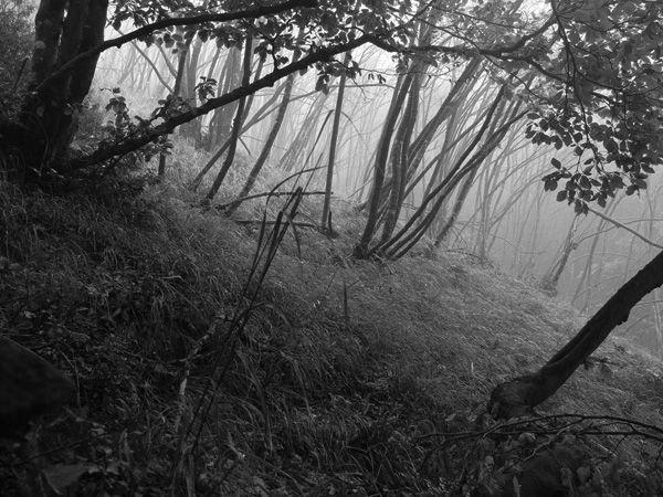 ottobre autunno nebbia biancoenero
