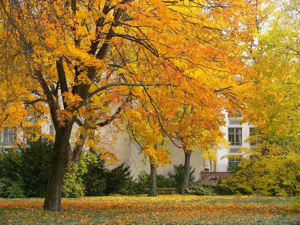 autunno Berlino Berlin