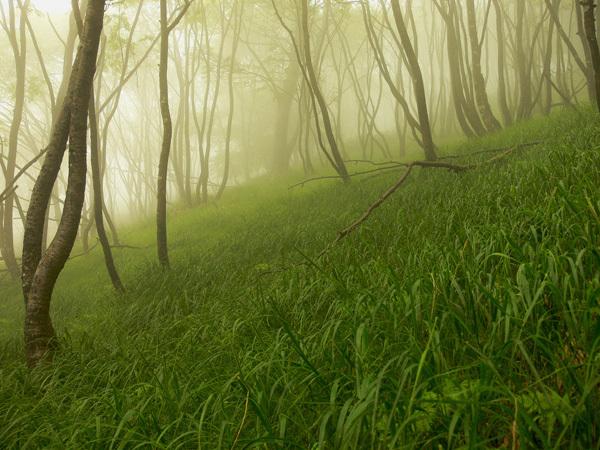 piante pioggia colori boschi montagna