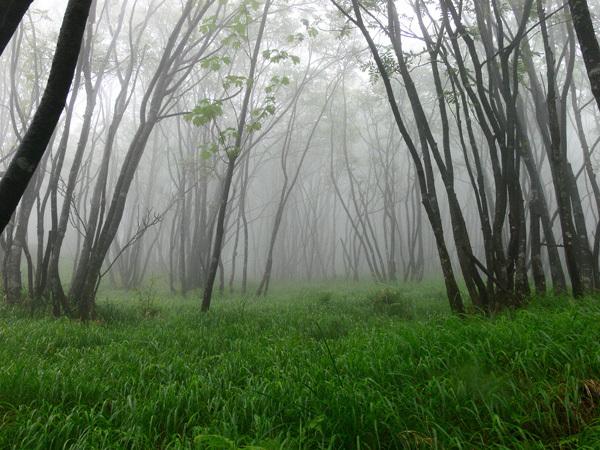 piante nebbia boschi montagna colori prati