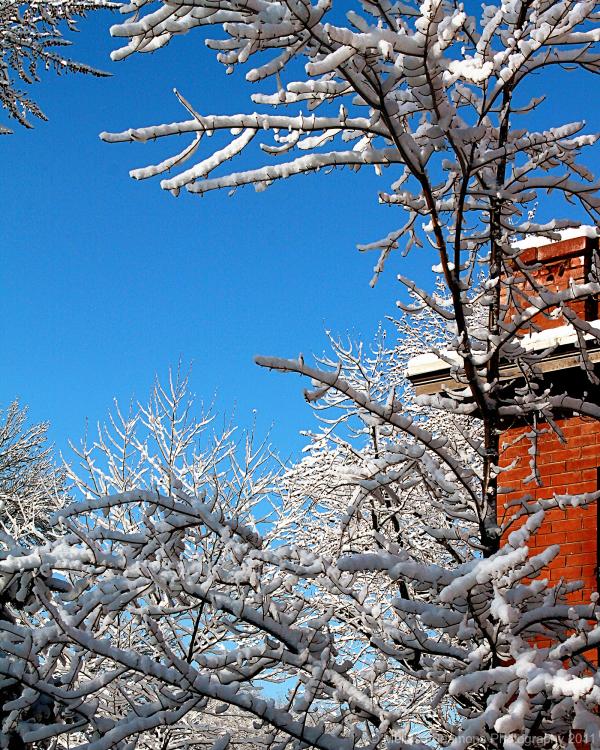 Snowy Trees 2