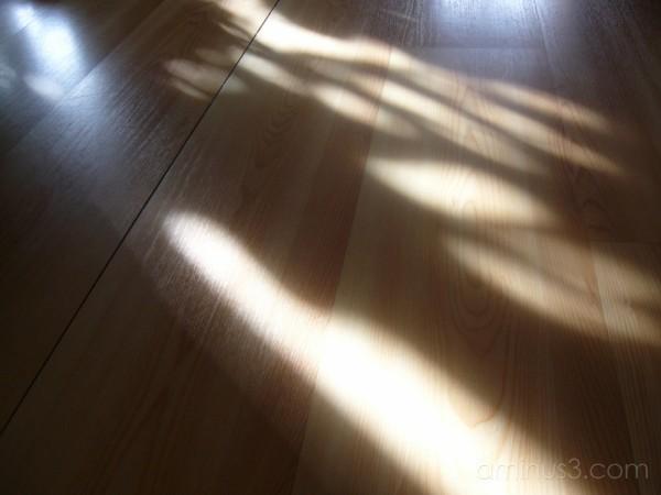 The light.