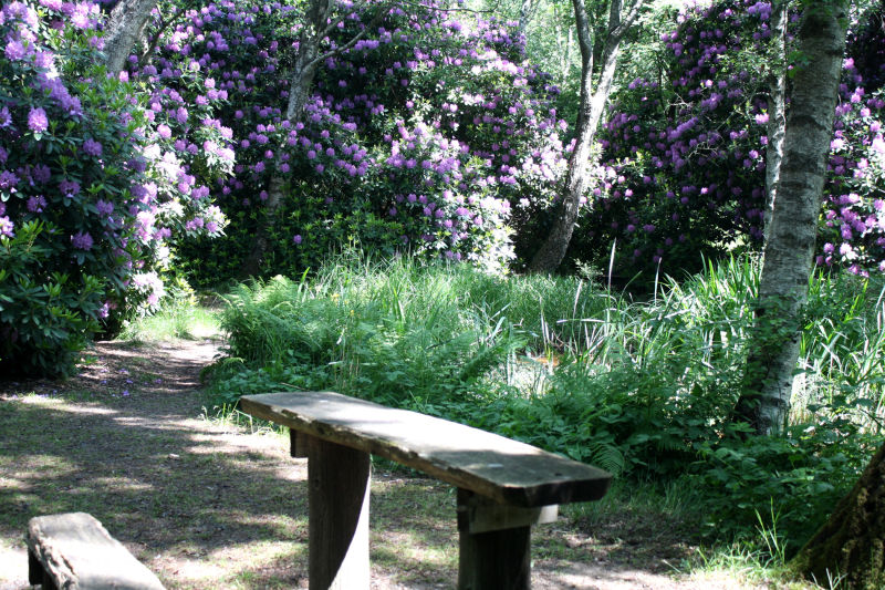 The rhododendron park.