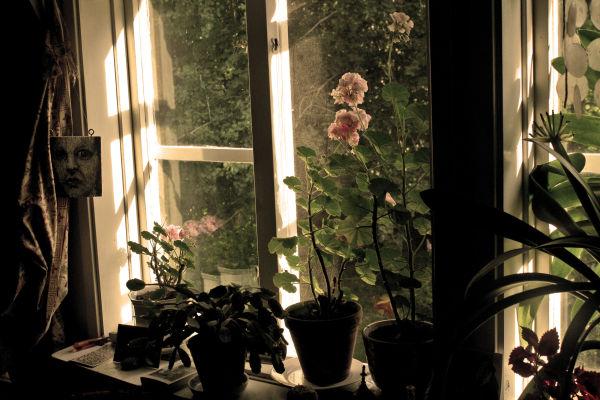 An upstairs window.