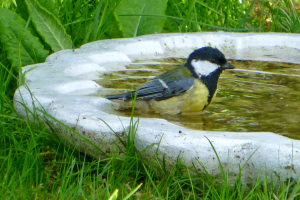 A pool guest - 2/2.
