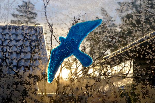 The blue bird at sunrise 09.42.
