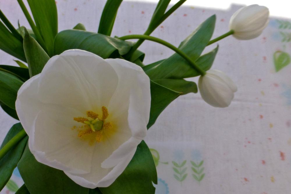 Inside a tulip.
