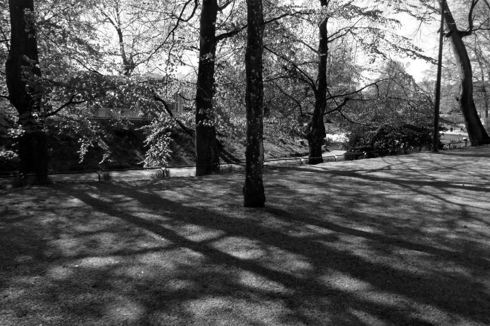Shadows in the park.