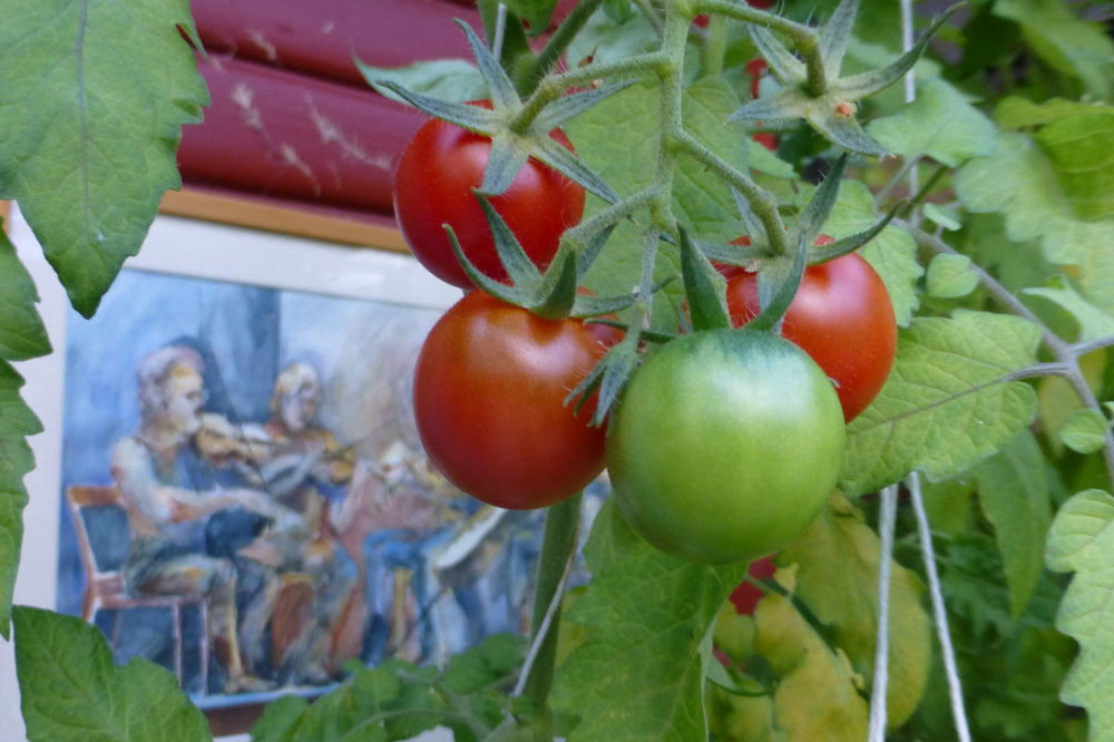 Tomatoes and art.