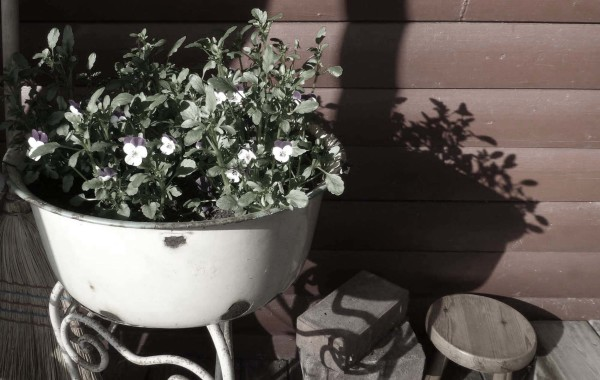 Flowers with shadow.