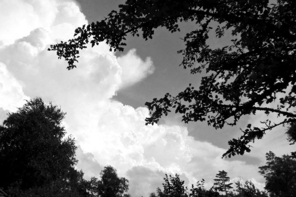 The hawthorn tree.