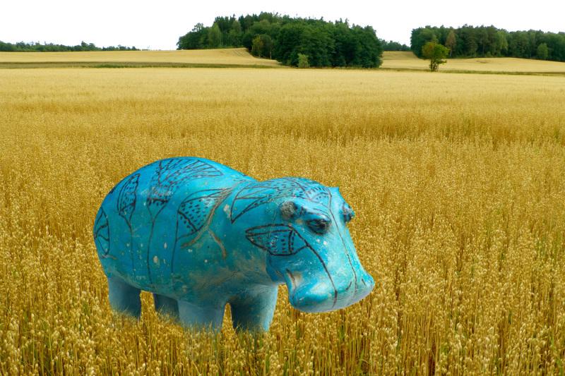 Hippopotamus William.