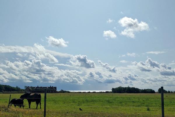 Horses near the sea.