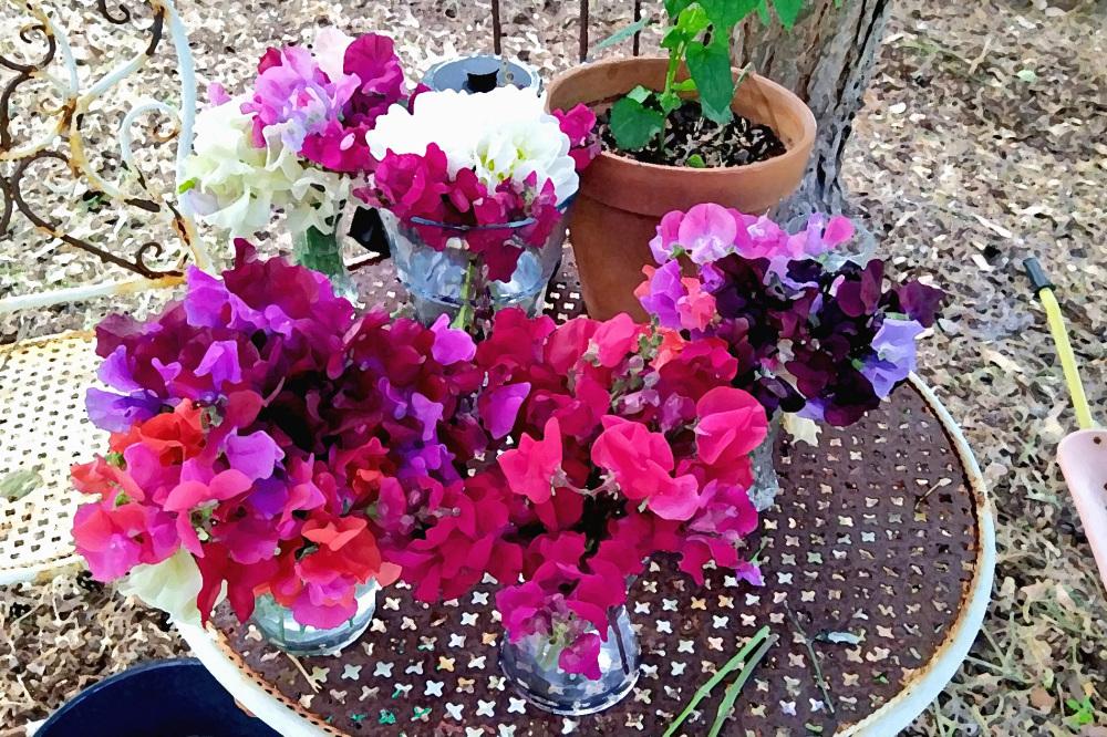 In the florist's garden.